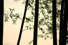 霧の中  竹