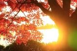 秋の陽は釣瓶落とし