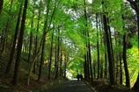 緑いろの空気を・・・【マー坊の定番場所】