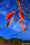 ・・秋色・・