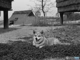 古代を守る犬