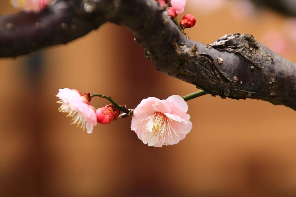 待ち遠しい 春