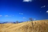 のんびり草原