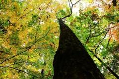 雑木林の紅葉