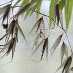 SONY DSC-HX50Vで撮影した(植物造形)の写真(画像)