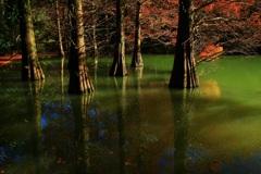 静寂な水面