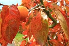 秋の味覚を召し上がれ・・・