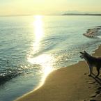 CANON Canon EOS Kiss X7iで撮影した(朝陽を浴びて)の写真(画像)