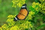 ・・花と蝶・・