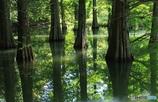 水面の木漏れ日