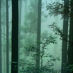 CANON Canon EOS Kiss X5で撮影した(霧の日)の写真(画像)
