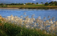 あさくらの自然 筑後川