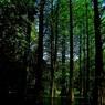 CANON Canon EOS Kiss X7iで撮影した(水上の樹木)の写真(画像)