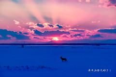 野付湾の夕日