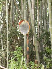 天然竹トリックアート略してTTT
