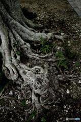 波照間 村の木の根元