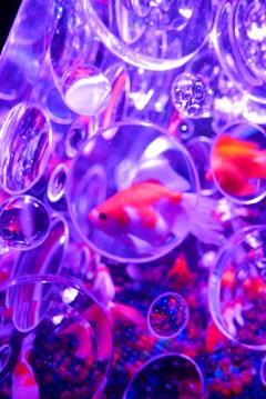 金魚の万華鏡
