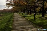 DSC00498 紅葉の始まった散歩道