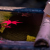 20161125-DSC04947-清水に一片の葉