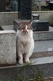 谷中の猫ちゃん.