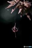 DSC02721 蜘蛛の糸