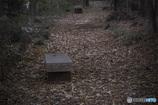 DSC00522 森の小道 .