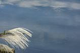 DSC00040. 秋空を映す川面と芒