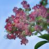 DSC05675. Beautiful summer flowers. jpg