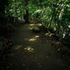 DSC00029-森蔭の径