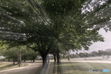 DSC04726 木陰のスペクトル