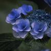 DSC06171 静かに咲く花