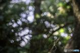 SDC00539 CC HDR 蜘蛛の巣. jpg