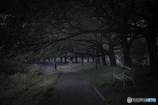 DSC09073-静かな遊歩道