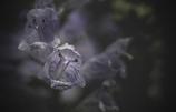 DSC01939  どん底に咲く花