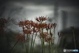DSC02068.  河原の彼岸花