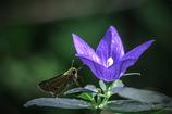 DSC01515-花と蝶?