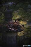 DSC02730 秋の寸景 灯篭