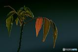DSC07868 春夏秋冬を演じる葉