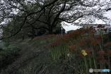 DSC09323.朝の遊歩道 jpg