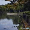 DSC05971 市立公園で見つけた秋模様