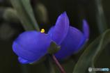 DSC06369 紫の夜