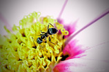 DSC03047-蟻の眼見たり