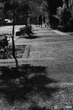 DSC08982 歩道に朝陽差す