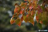 DSC01654  公園の秋