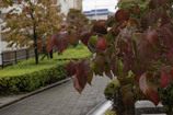 DSC09485  遊歩道の紅葉