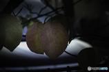 DSC06297ハナミズキの葉も色付く候