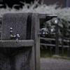 水飲み場と雪柳