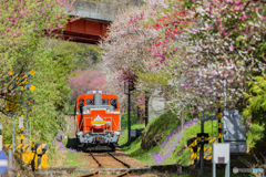 2018.4.13花のわたらせ渓谷鐡道⑪