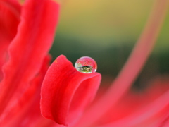 水滴と反射の世界