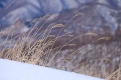 冬の風を浴びて